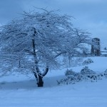 photo2008-khs-Park-Xmas-snow-12-22-04269