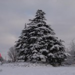 photo2008-khs-Park-Xmas-snow-12-22-04277