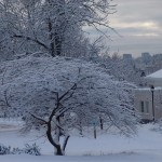 photo2008-khs-Park-Xmas-snow-12-22-04285